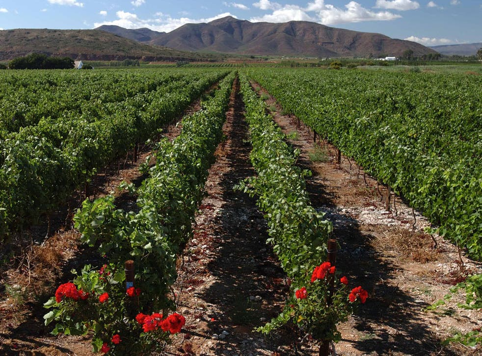 South Africa's wine sector grew more than 200 per cent between 1998 and 2010
