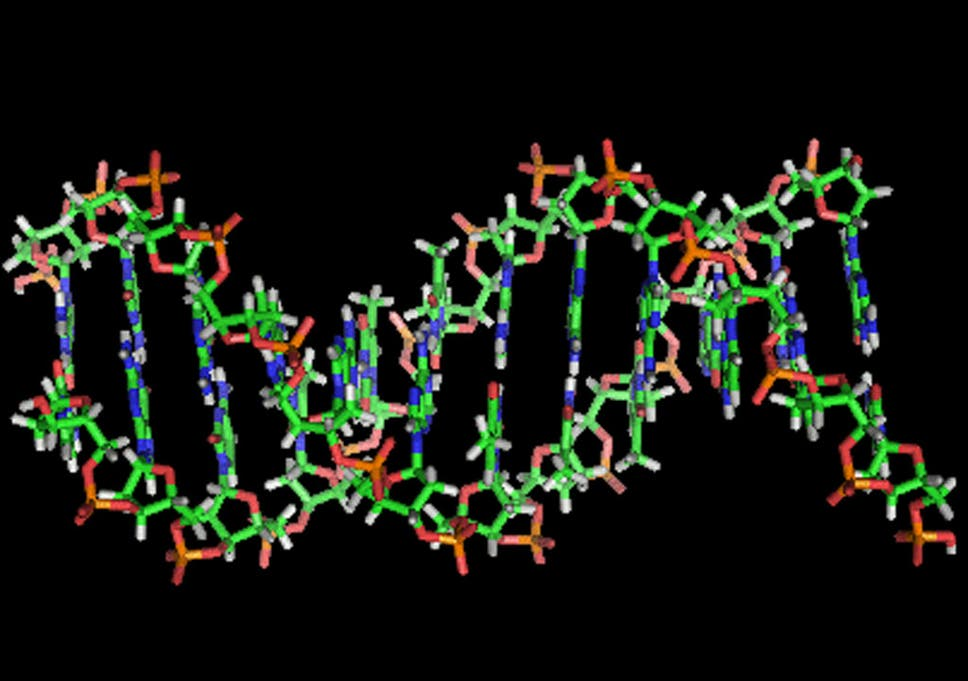 Scientists Debunk Junk Dna Theory To Reveal Vast Majority Of Human