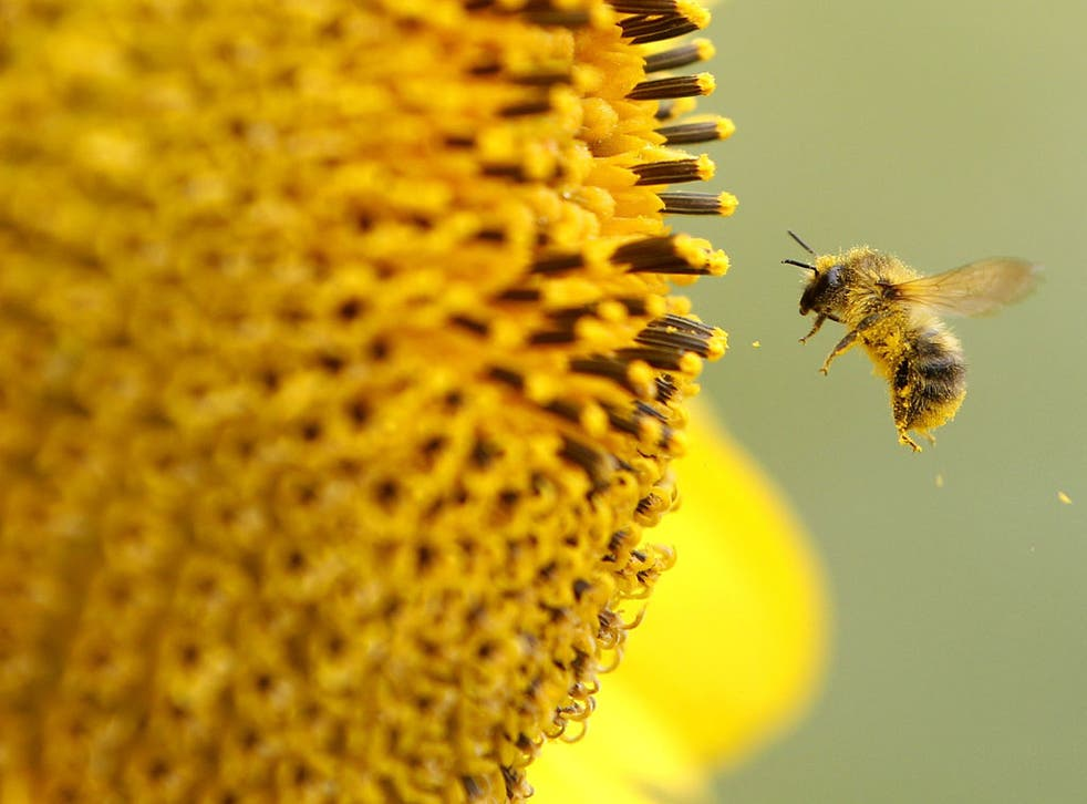 A bee can absorb pesticides from plants and carry the poison back to its hive
