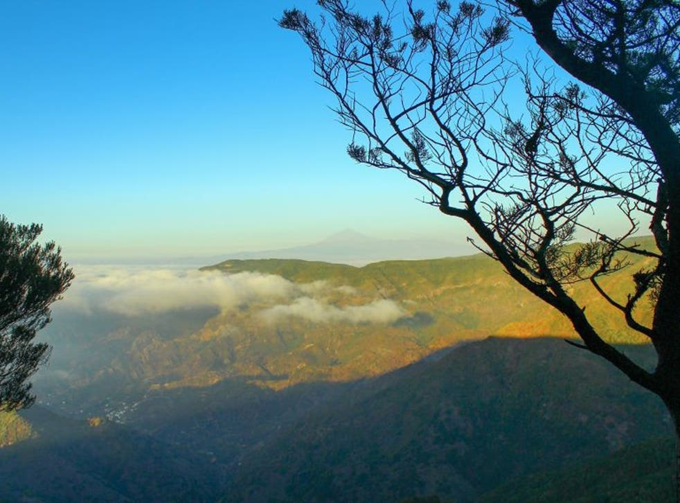 Green shoots: La Gomera is popular with hikers