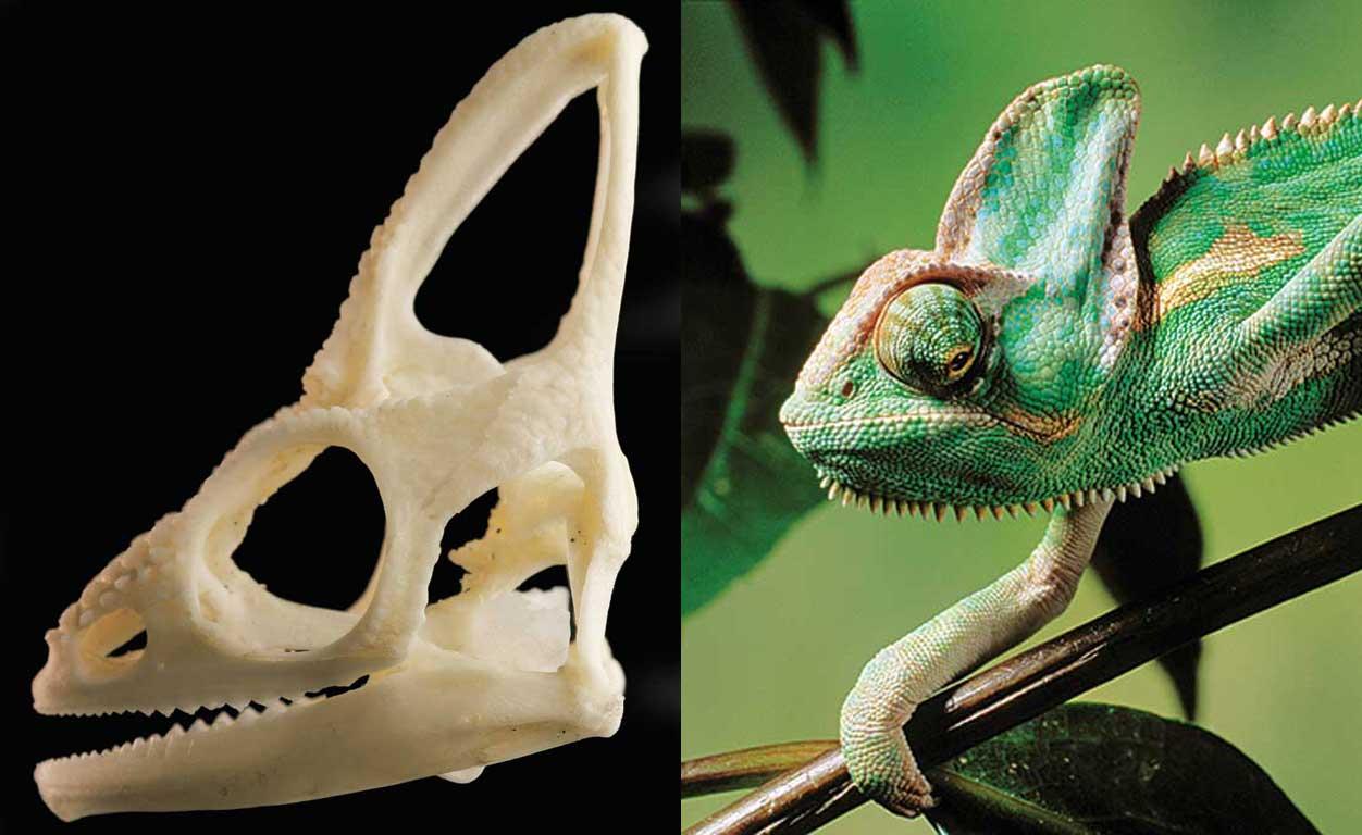 The bone man: A skull collector reveals his extraordinary