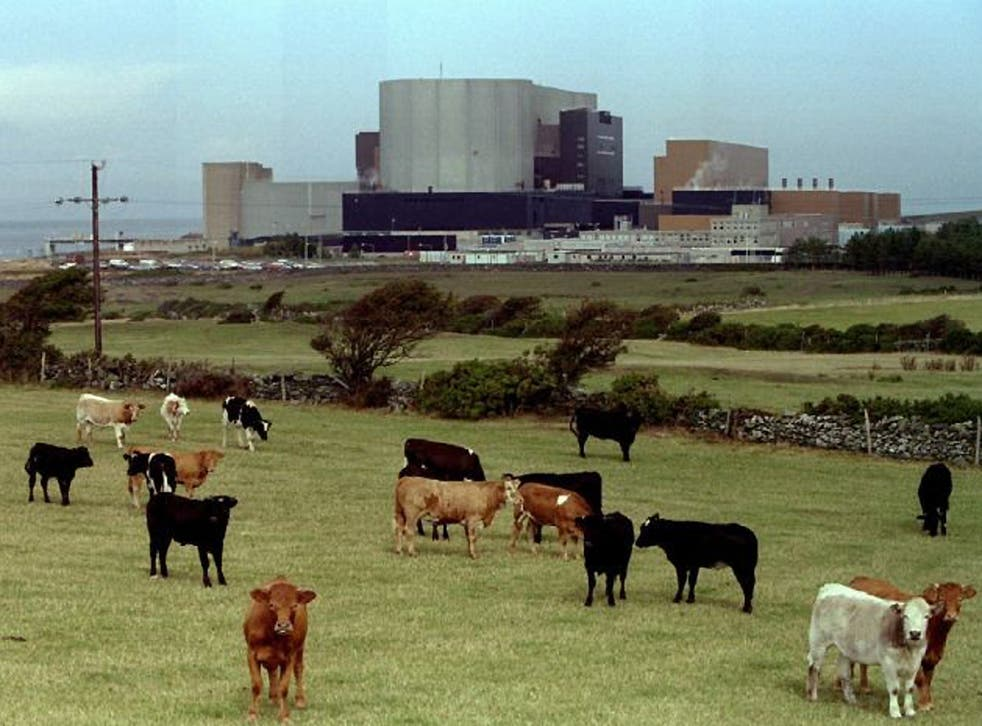 Cattle graze in front of British Nuclear Electric's Wylfa Magnox plant in Anglesey, Wales in a 1995 file photo. Japanese energy and engineering company Hitachi has bought Britain's Horizon nuclear project to build four to six new nuclear power stations -