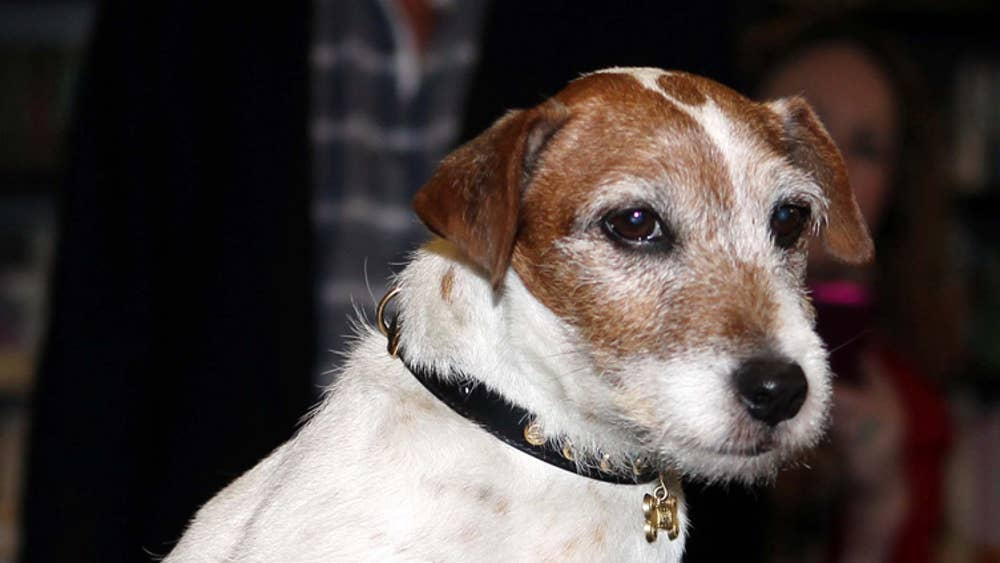 Canine star of 'The Artist' Uggie launches his autobiography