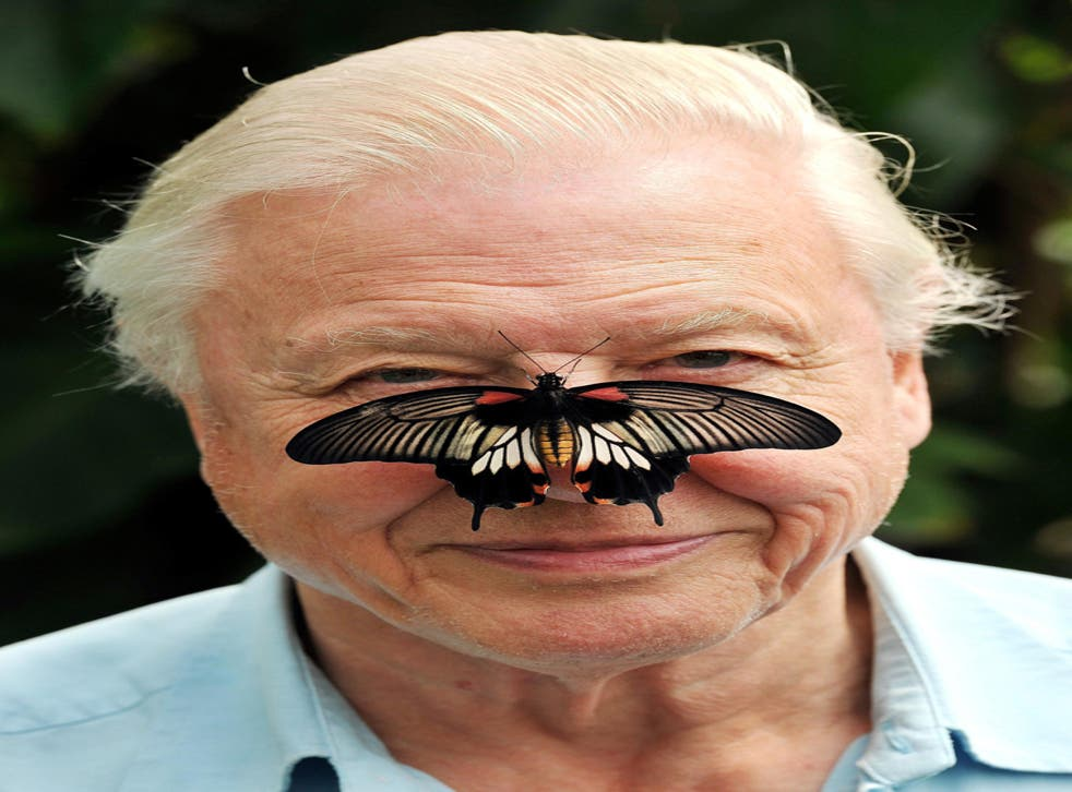 Sir David Attenborough who has said Young naturalists have become an 'extinct' species in the British countryside.