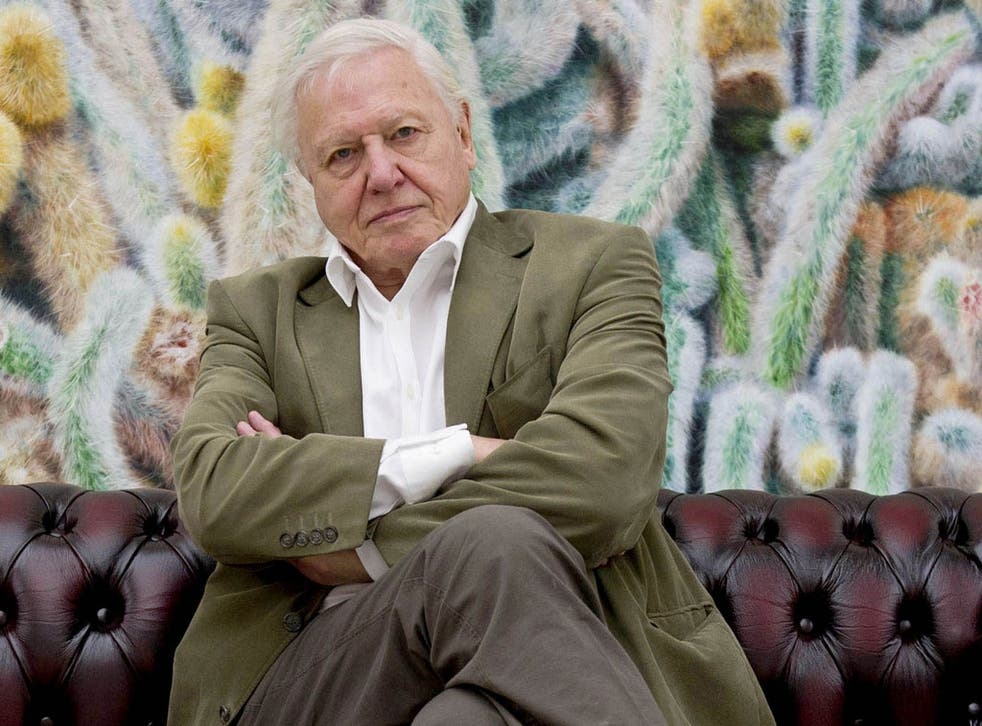 """TV naturalist Sir David Attenborough has warned that human beings have become a """"plague on the Earth"""""""