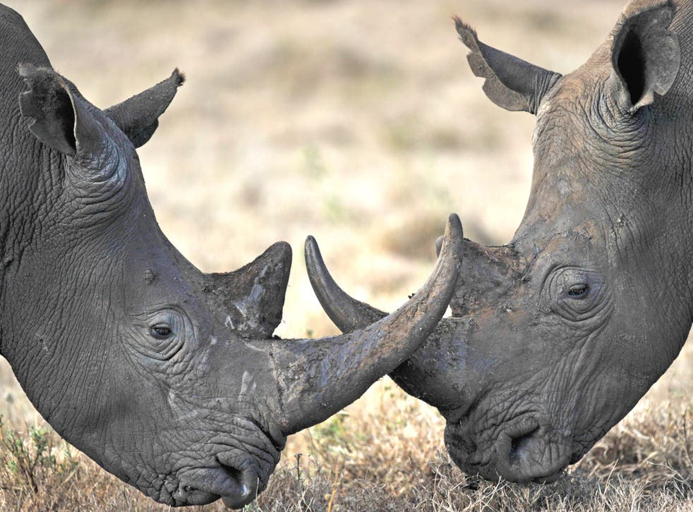 South Africa is home to about 20,000 rhinos