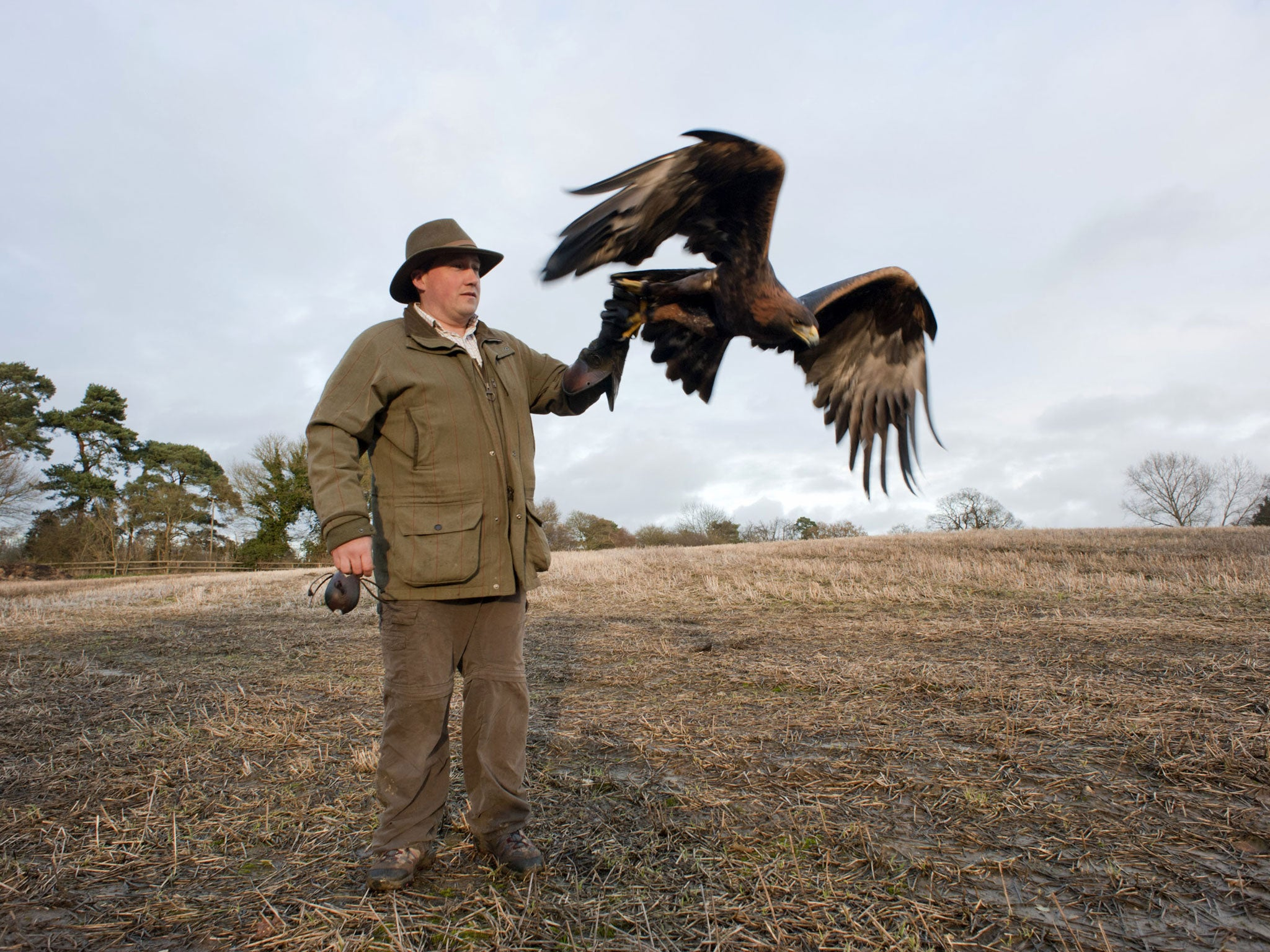 Come fly with me: Britain's passion for birds of prey | The Independent