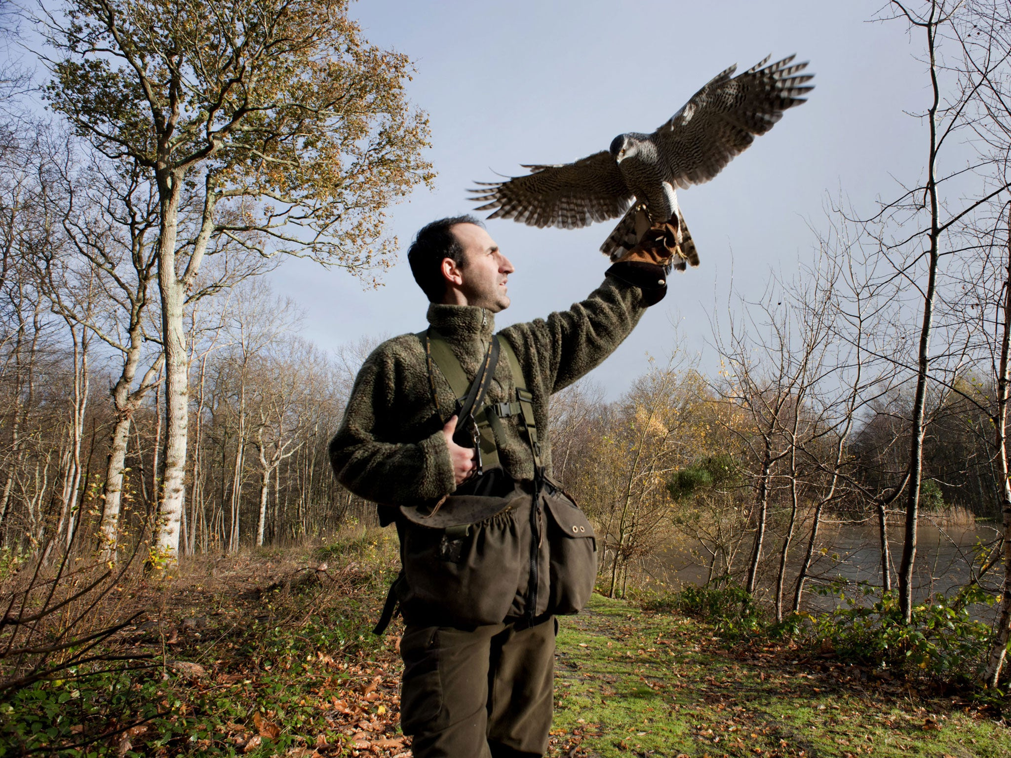 Come Fly With Me Britains Passion For Birds Of Prey The Independent