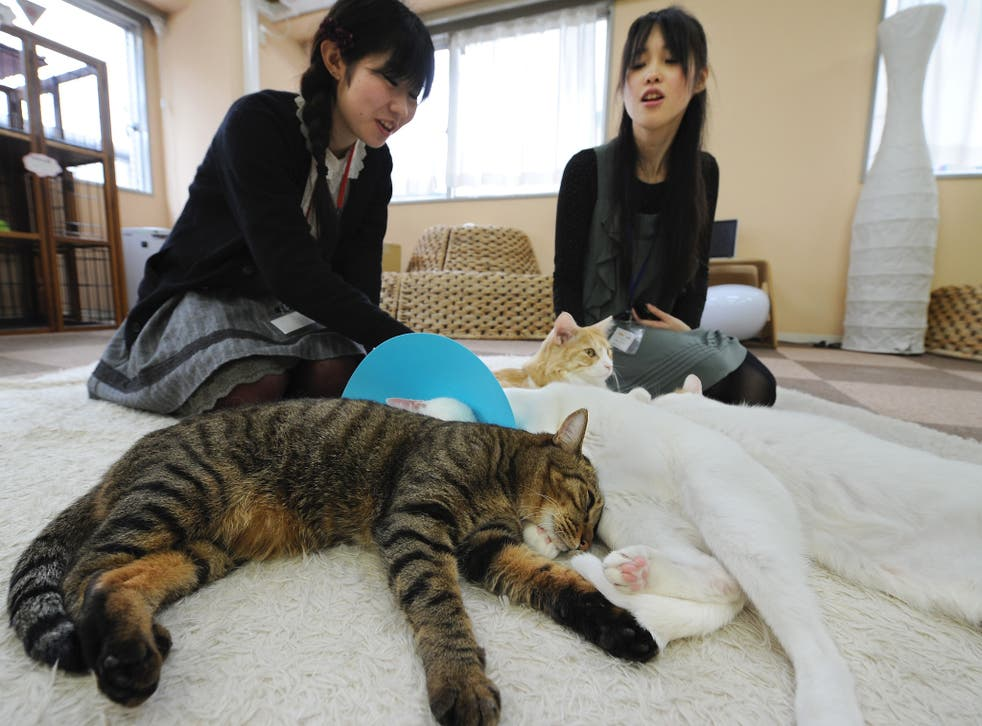 Cat-themed cafes began in Taiwan and took off a decade ago in Japan's crowded cities