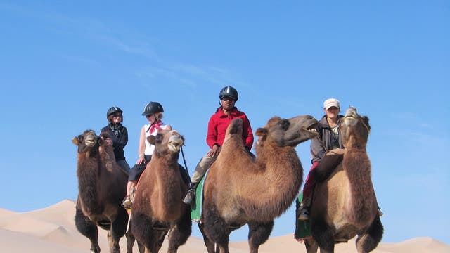 Camel trekking in the Gobi
