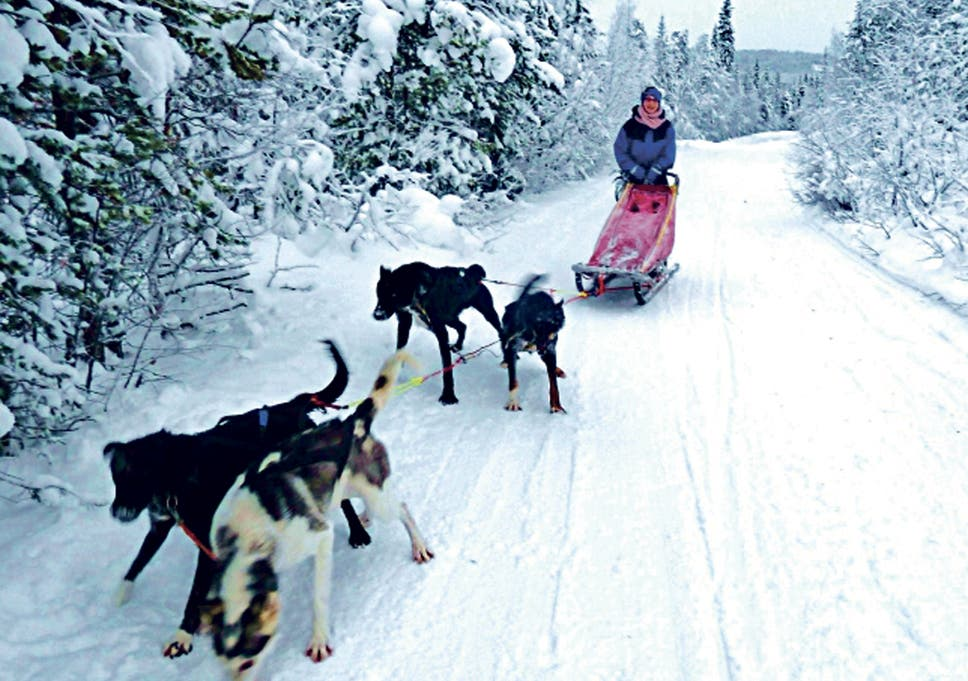 Husky Mushing In Lapland The Trip With Paw Wheel Drive The