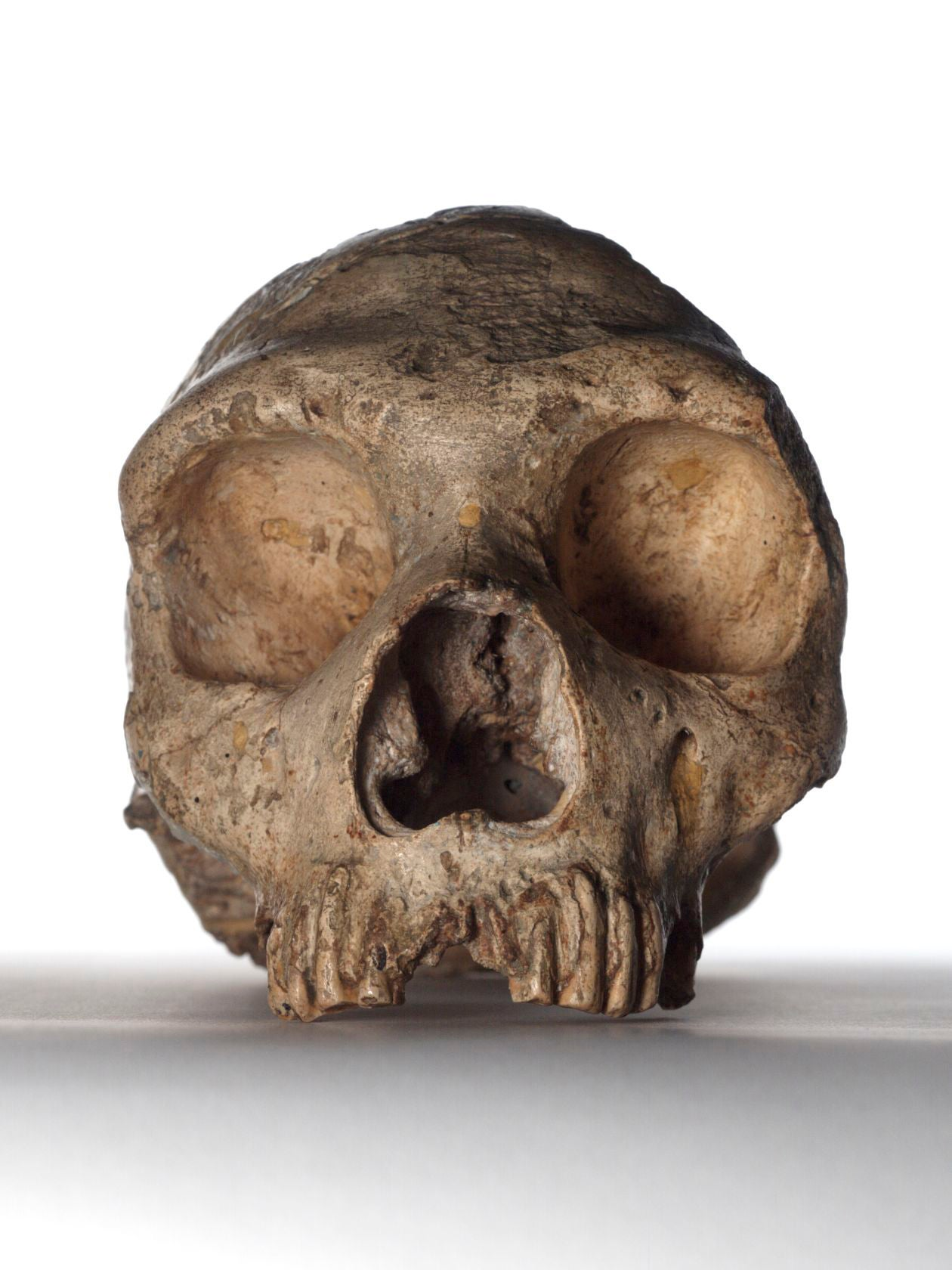 Neanderthals' large eyes led to their downfall, says study
