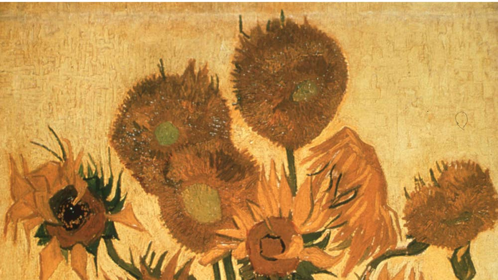Sunflowers Wilt Van Goghs Masterpiece Is Slowly Turning Brown As A