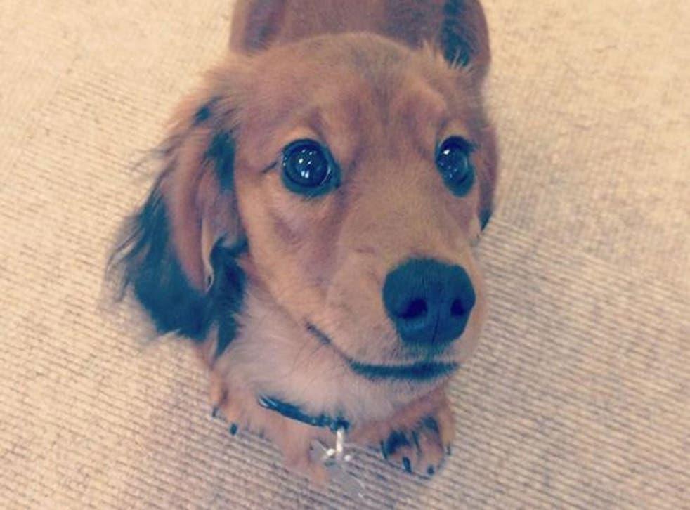 Alan, Tatler magazine's 'office dog'