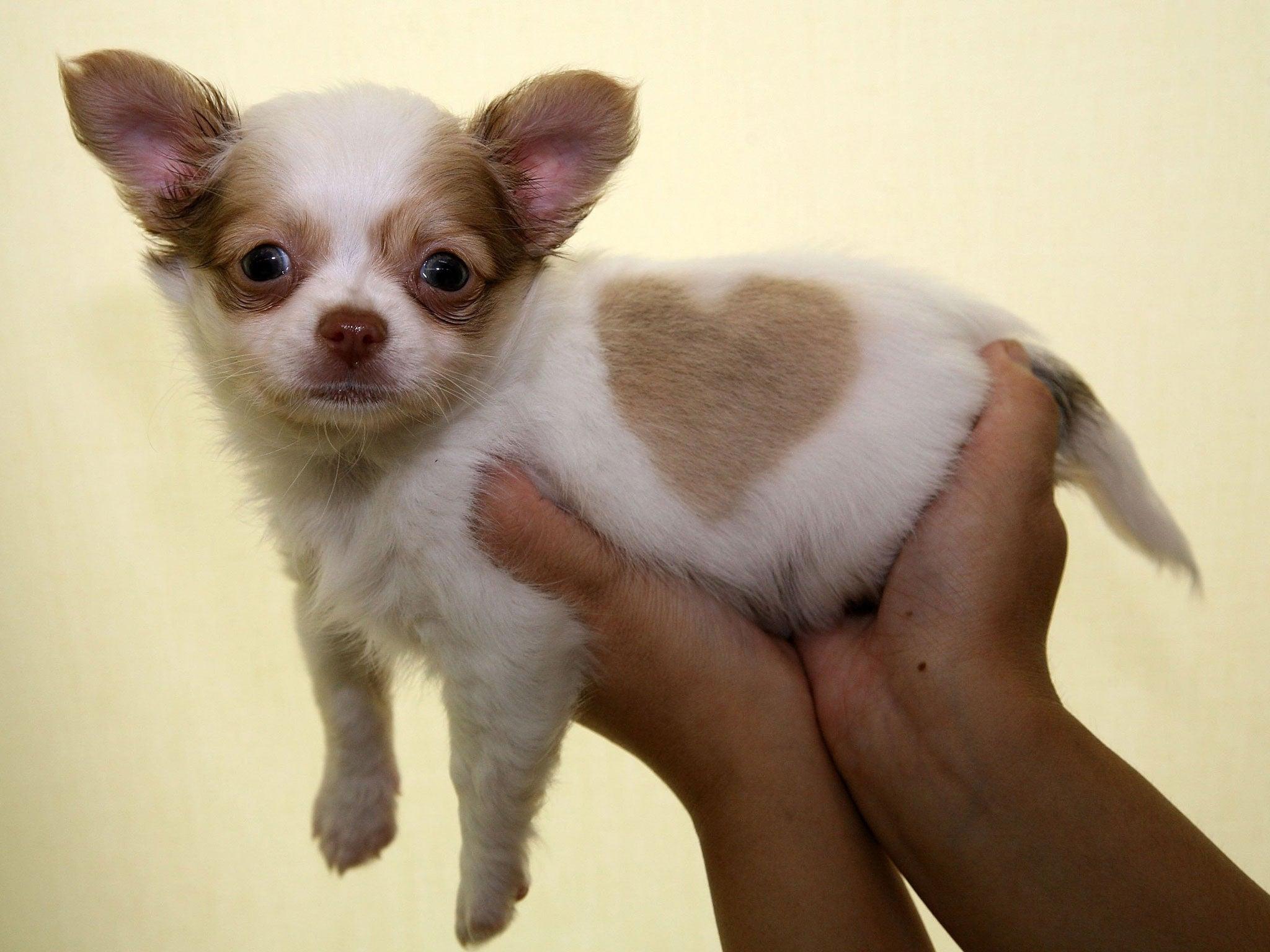 Dating ein mädchen mit einem hund