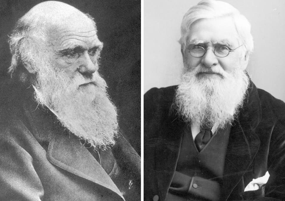 natural selection it takes two darwin s rival alfred russel