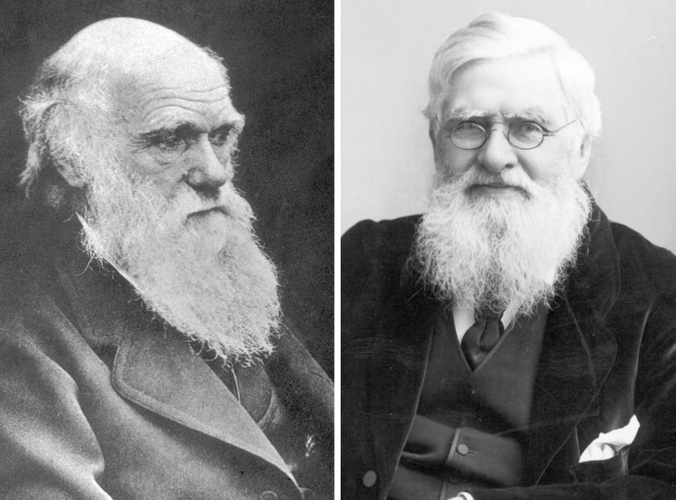Science giants: Wallace, right, sent his theories on evolution to Darwin, left