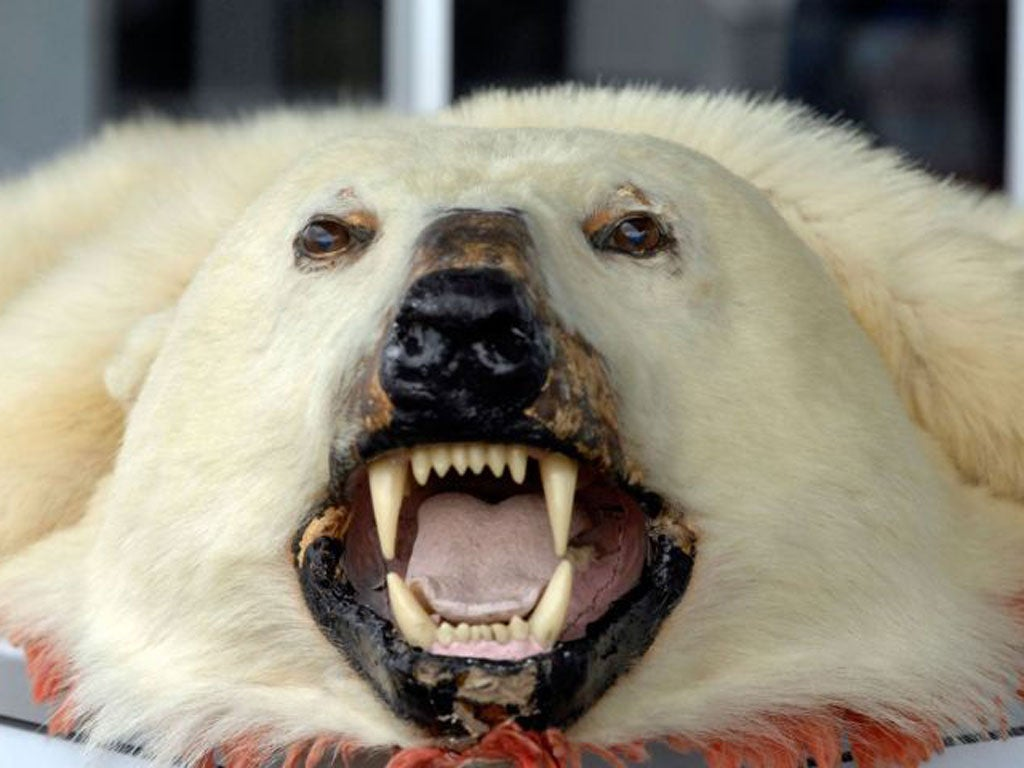Britain urged to stop supporting the trade in dead polar ...