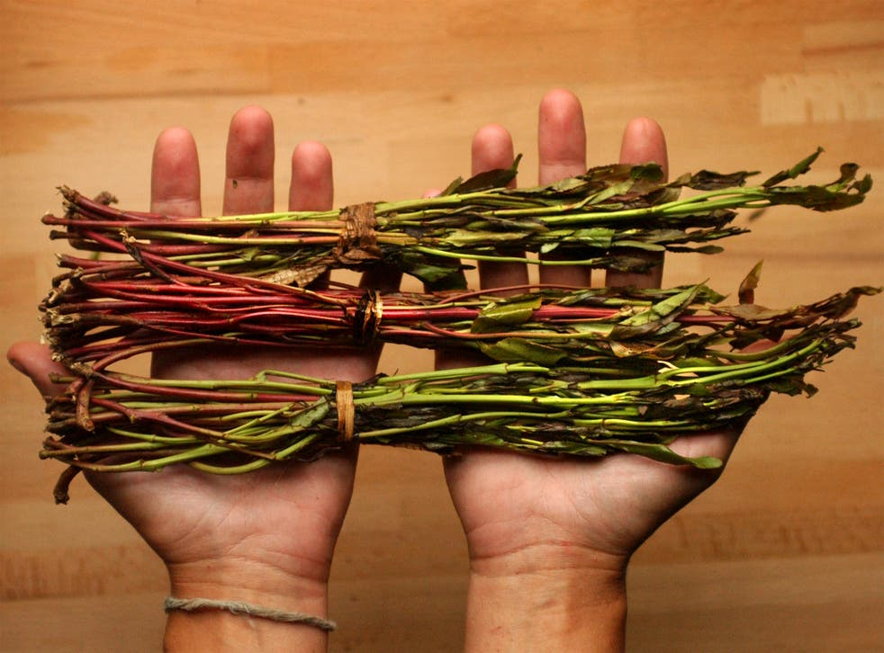 Khat is banned in the Netherlands