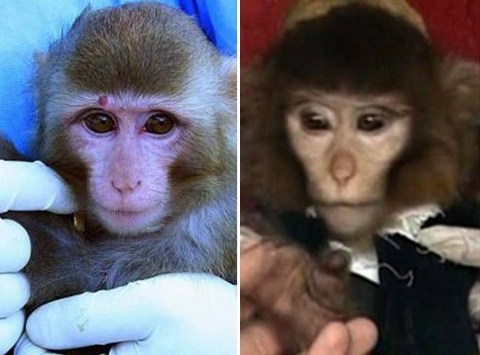Images Iran claims are of the same monkey: after the launch (right) and before (left)
