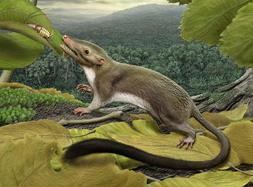 An artists impression of the earliest ancestor of most mammals living today, including humans