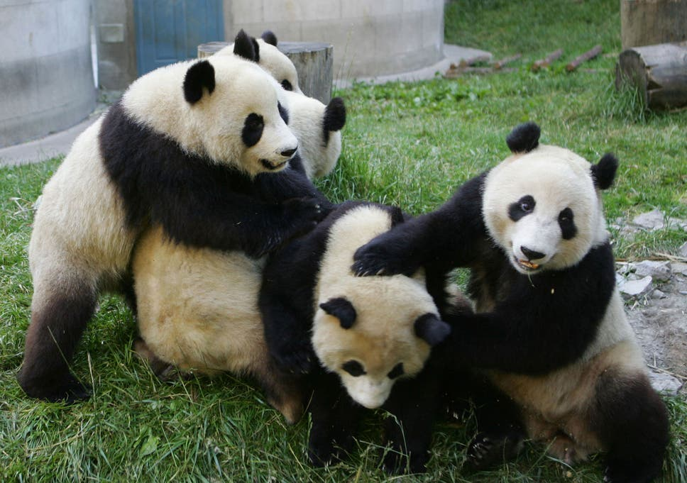 The answer to the Mantel Middleton Maelstrom is obvious: replace the  monarchy with pandas