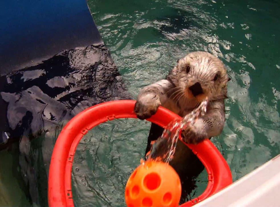 Eddie practises in his training pool