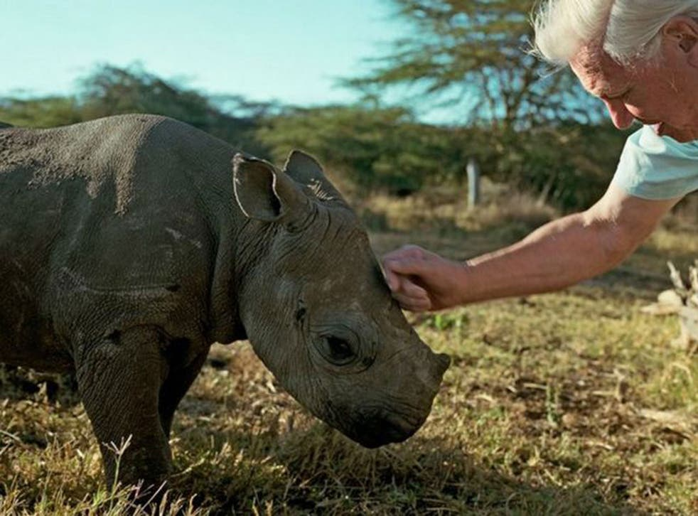 Nicky the baby rhino with David Attenborough in the last of BBC1's Africa series