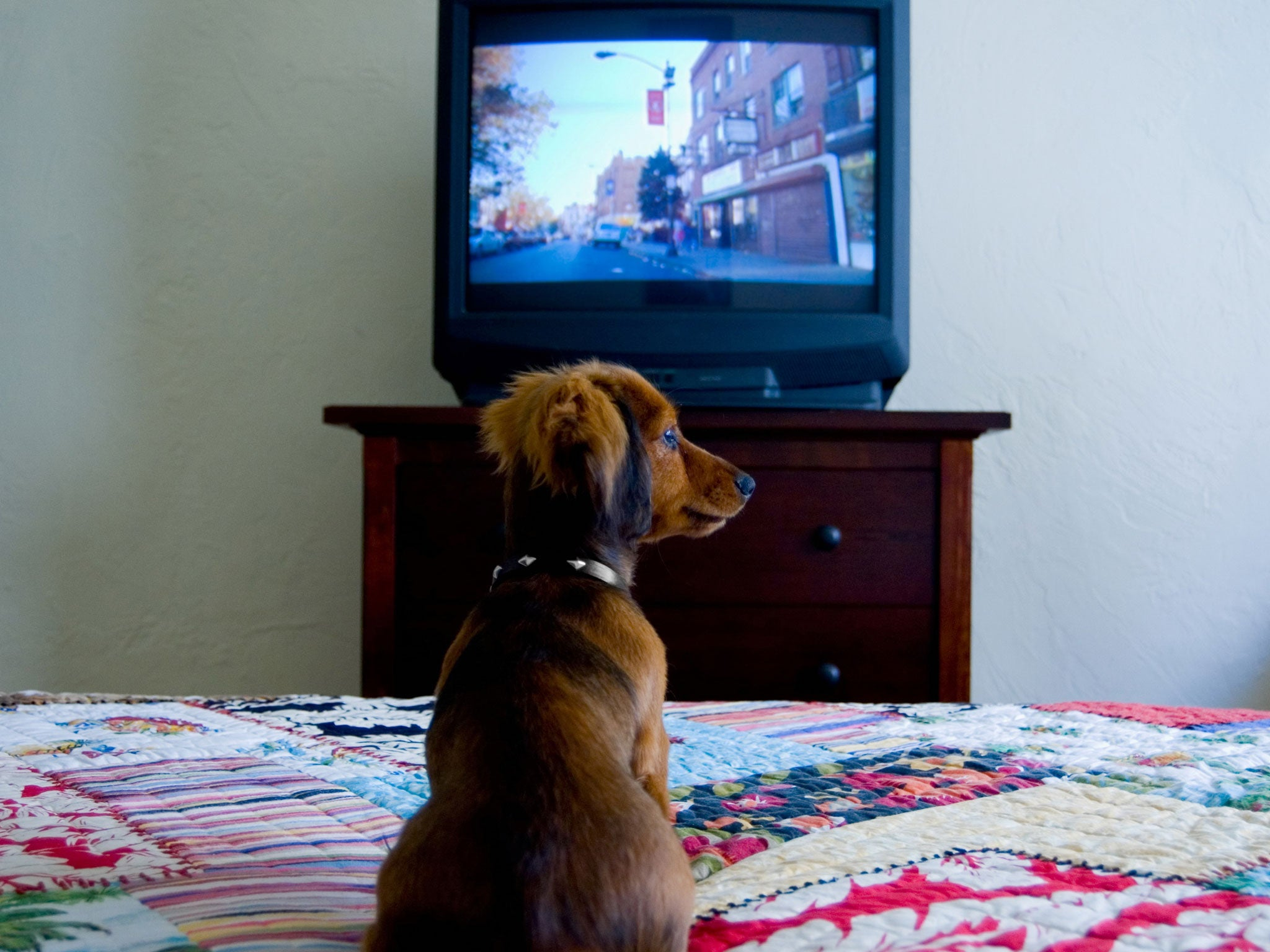 No cats allowed! TV channel for dogs launches in Israel