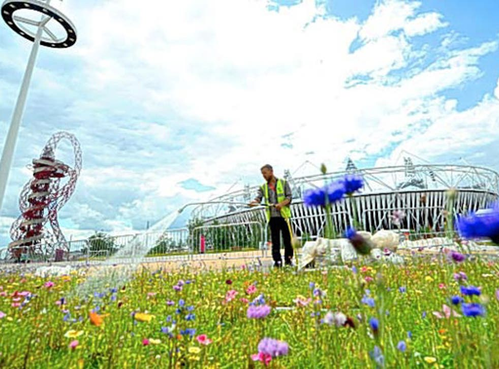 Splash of colour: work to create a 21st-century pleasure garden will build on the success of the vibrant wildflower meadows that delighted visitors to the Games