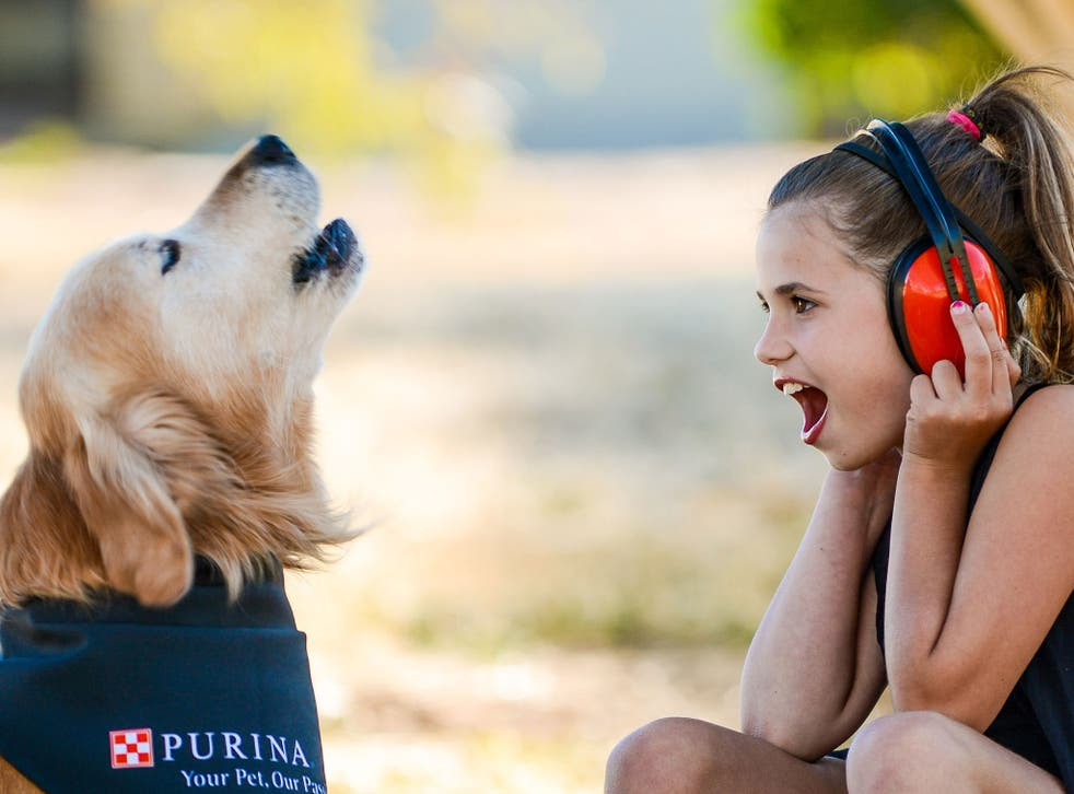At a staggering 113.1 decibels, Charlie's bark is as loud as a rock concert