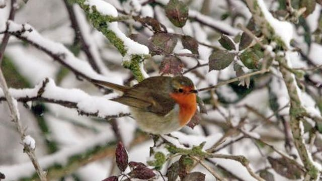The seemingly never-ending winter is having a serious effect on Britain's wildlife, some of which won't see the spring