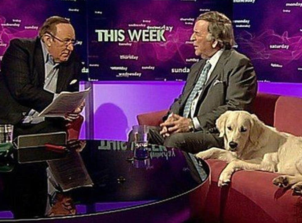The latest star of the BBC is a golden retriever called Miss Molly