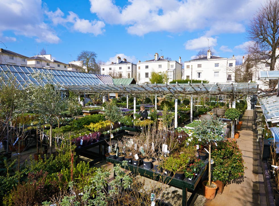 Growing pains: Plant nurseries complained of disastrous sales in March