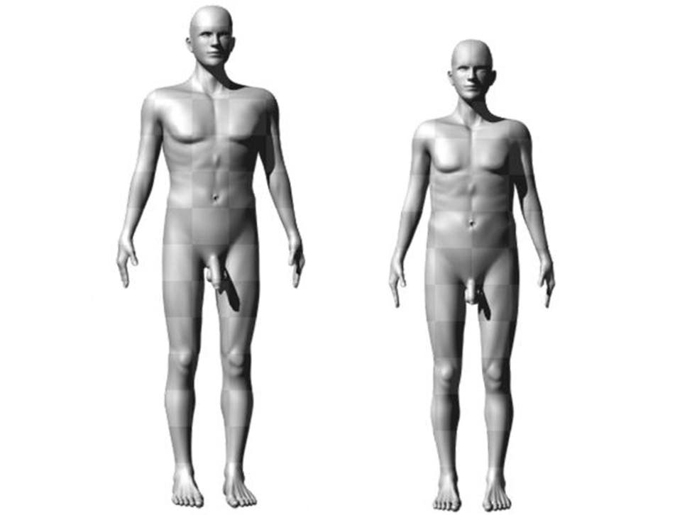 Scientists have discovered that size really does matter to women when it comes to the length of a man's manhood