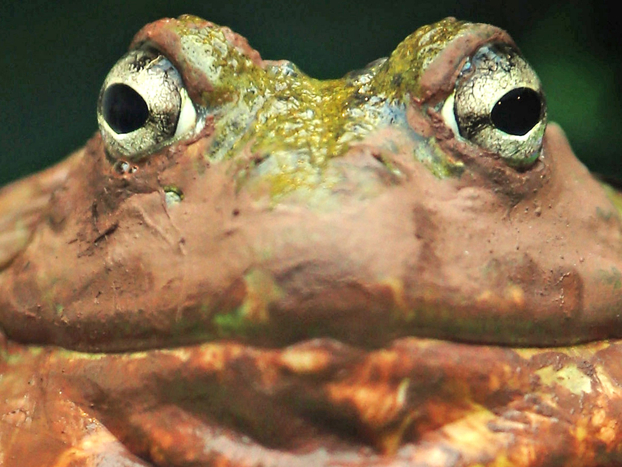 us man with frog phobia wins 1 6m in damages after run off water