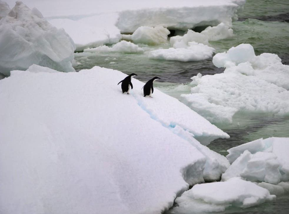 Adelie Penguins navigating their way through hundreds of huge icebergs. Scientists claim they've taken a step closer to developing hydrogen as a cheap and clean energy