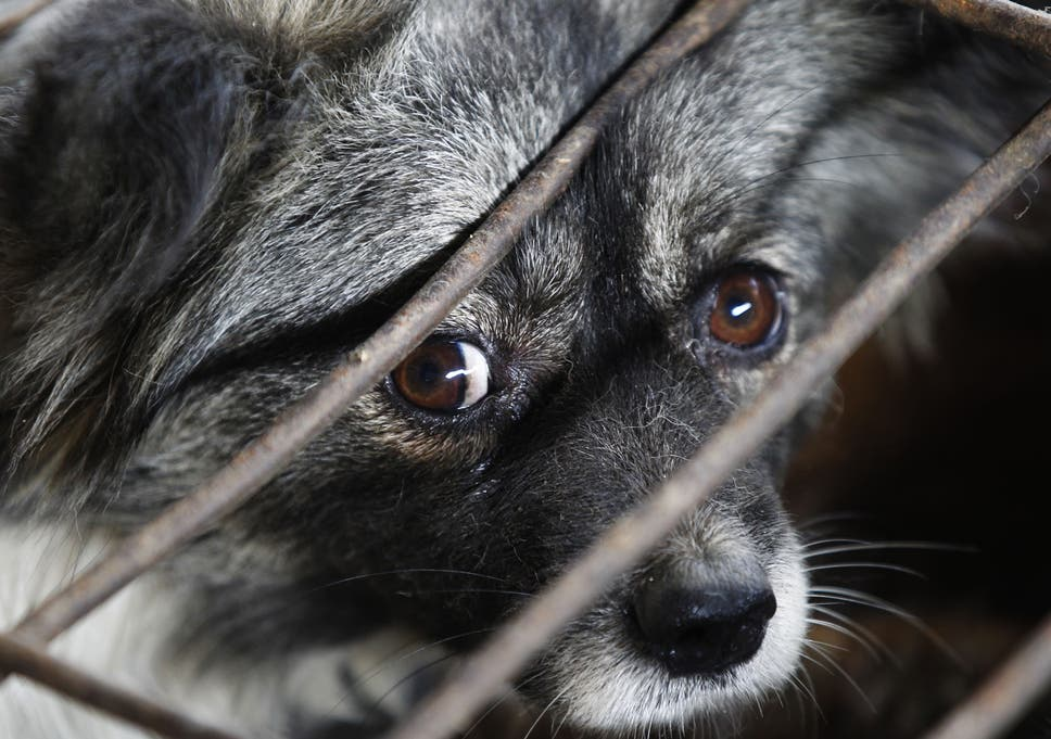 Image of: Wales Rspca And Other Animal Welfare Charities Could Lose Their Powers To Prosecute Changeorg Rspca And Other Animal Welfare Charities Could Lose Their Powers To