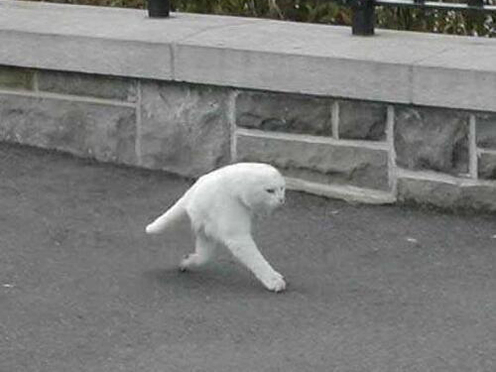 half cat 2048 revealed the 'half cat' not created by google street view the,Two Legged Cat Meme