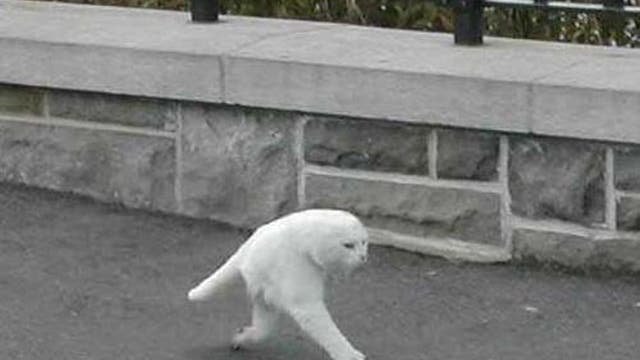 The image of the half-cat posted on imgur yesterday, claiming to be the result of a Google Street View glitch