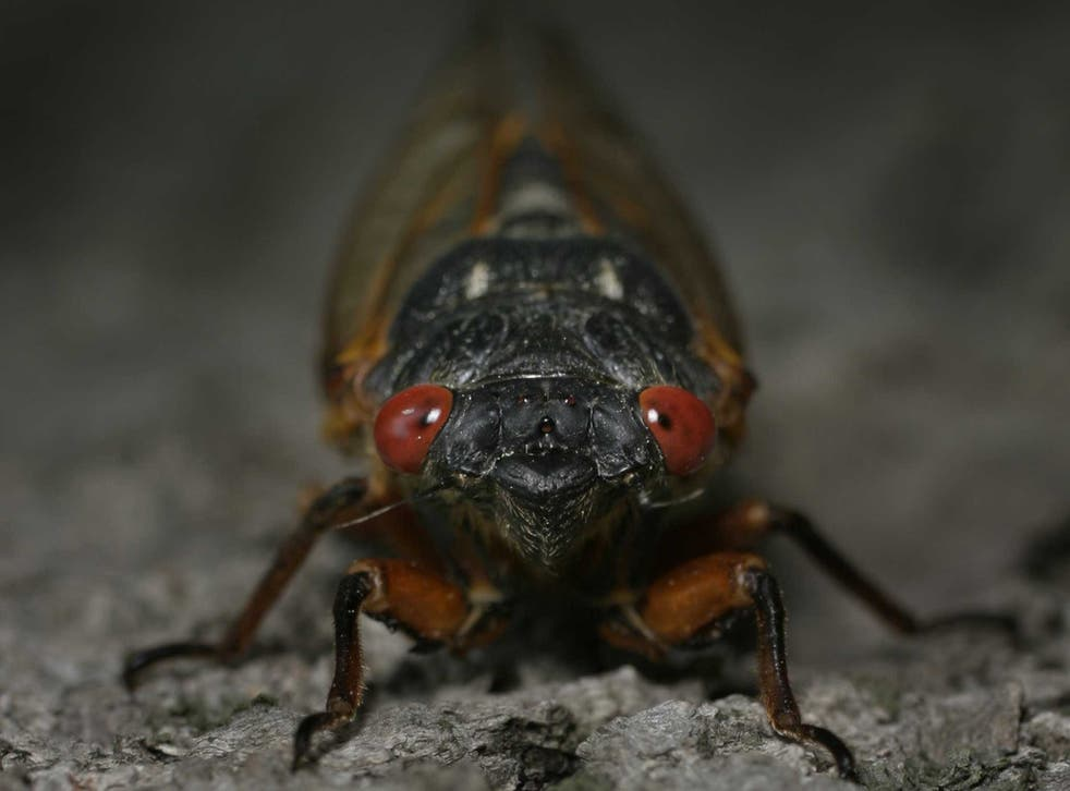 <p>Concerns about cicadas have caused a Washington, DC wine bar to close for a month</p>