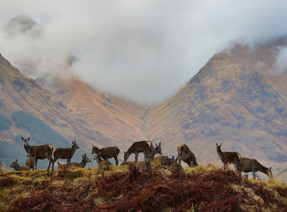 Who owns, and controls, the landscape? Red deer hinds grazing