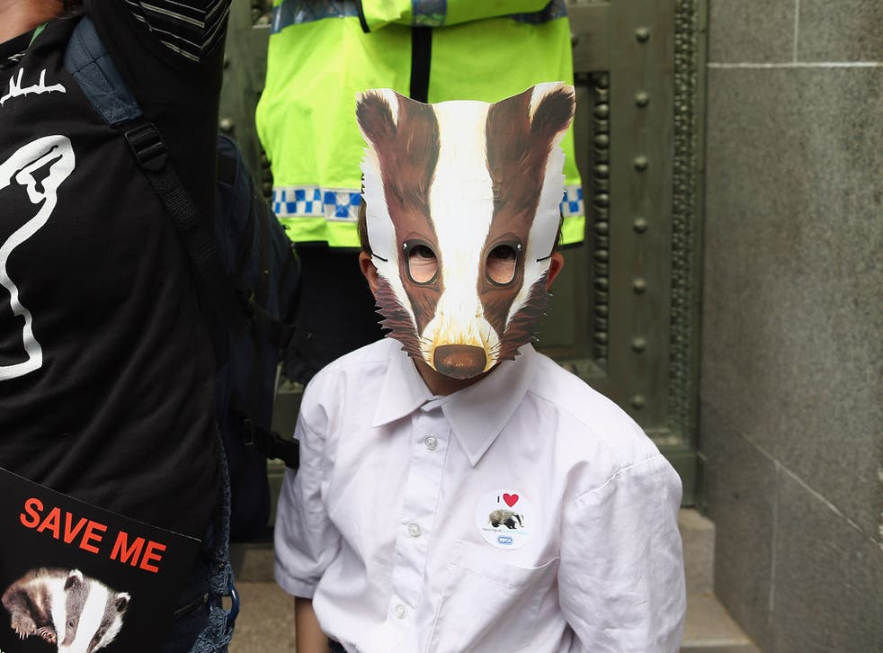 A badger supporter in London on Saturday