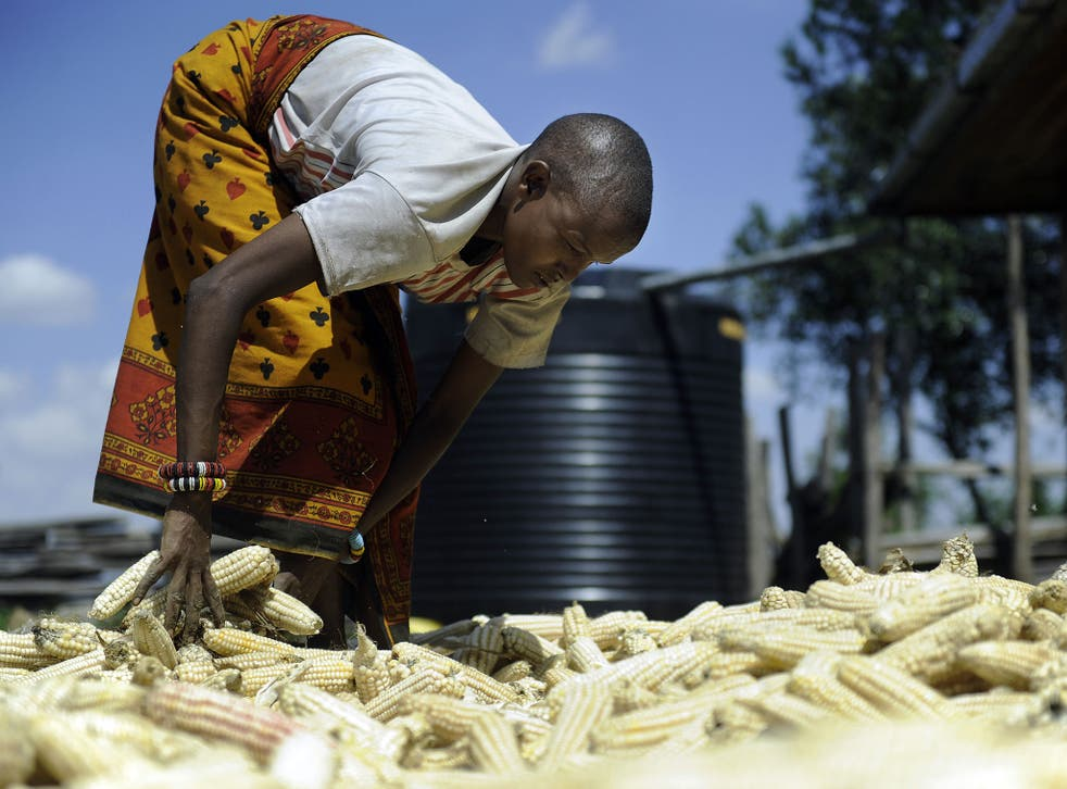 Restrictive laws on biotechnology, stemming from European pressure, cast a 'dark shadow' over African farmers