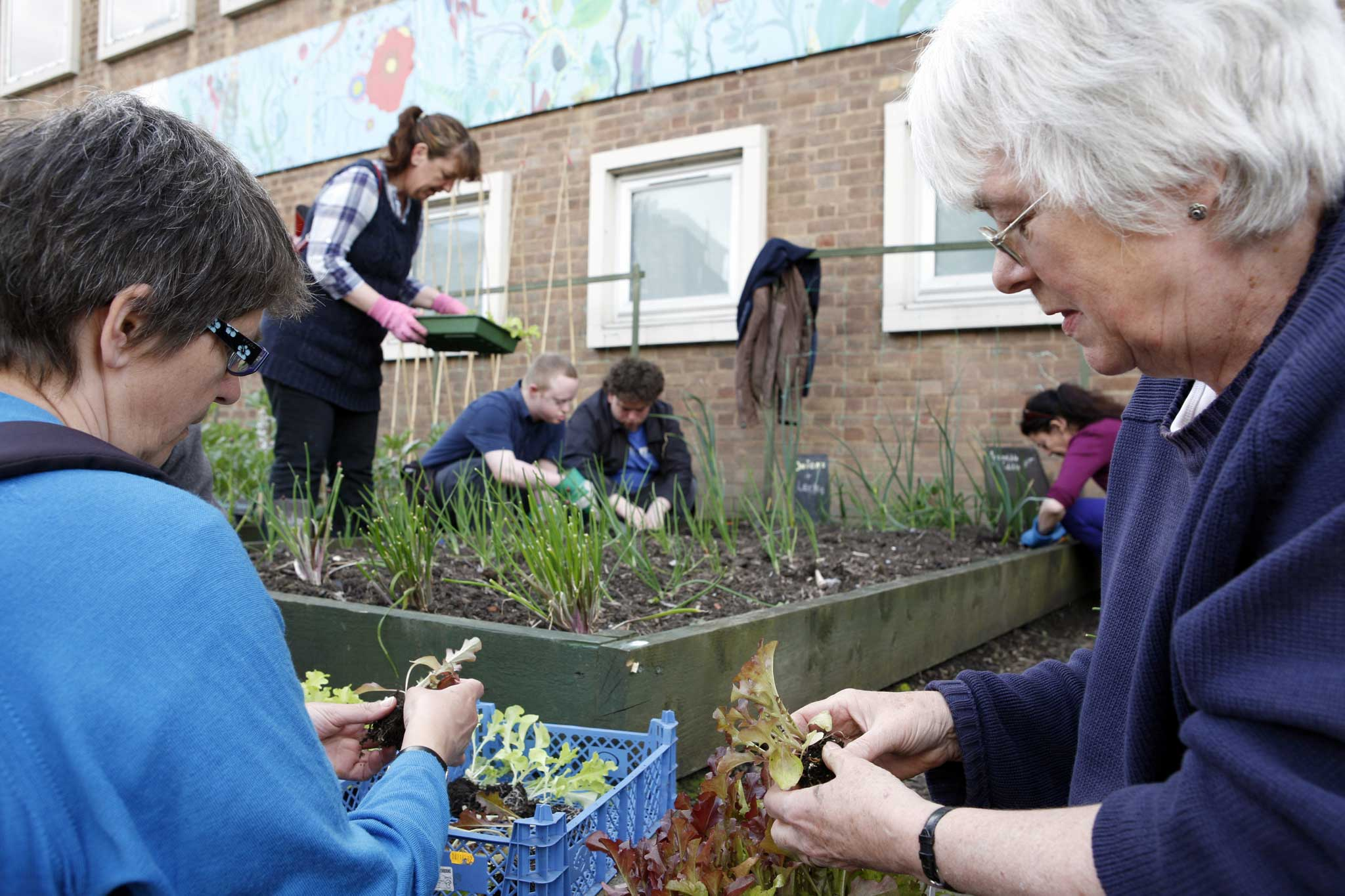 Incredible edible: Guerrilla gardeners are planting veg for
