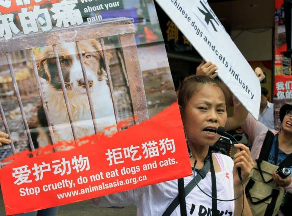 Animal rights activists protest at Yulin's dog meat festival