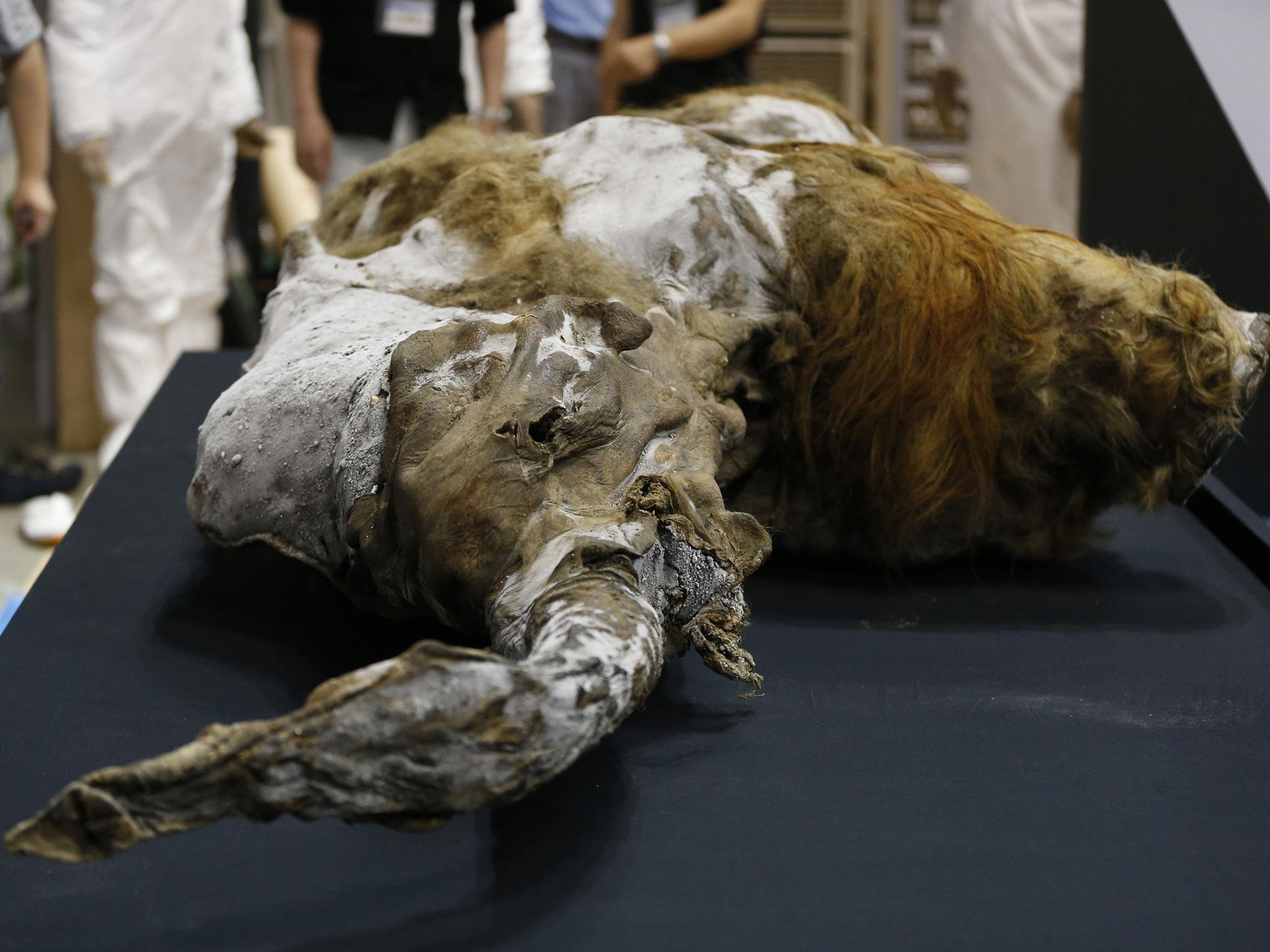mammoth-1.jpg