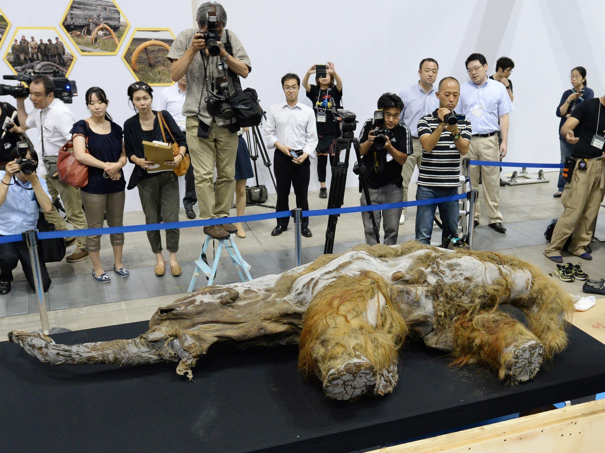 mammoth-7.jpg