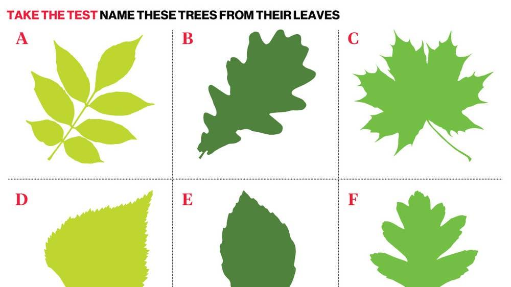 how to identify trees uk