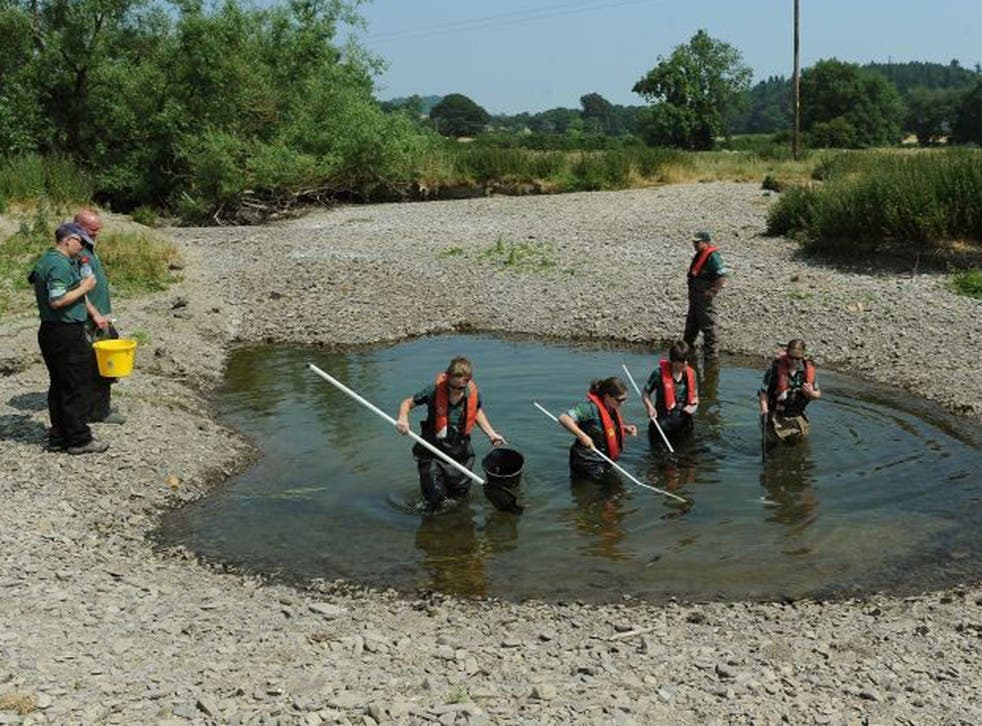 Monitoring officers Emily Huntingford, Sally Richardson and Imogen Nicholson and Fisheries officer Laura Bullock of the Environment Agency search a remaining pool of water in the dried bed of the River Teme, in north Herefordshire, for fish that have beco